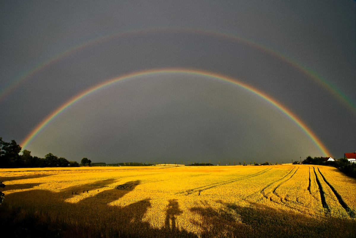 "Wallprint ""double rainbow"""