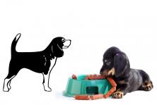 "Wandtattoo ""Beagle"""