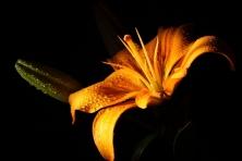 """Poster """"Blume bei Nacht"""""""