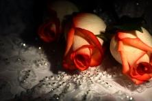 """Poster """"Zwei Rosen"""""""