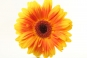 "Poster ""Sonnenblume"""